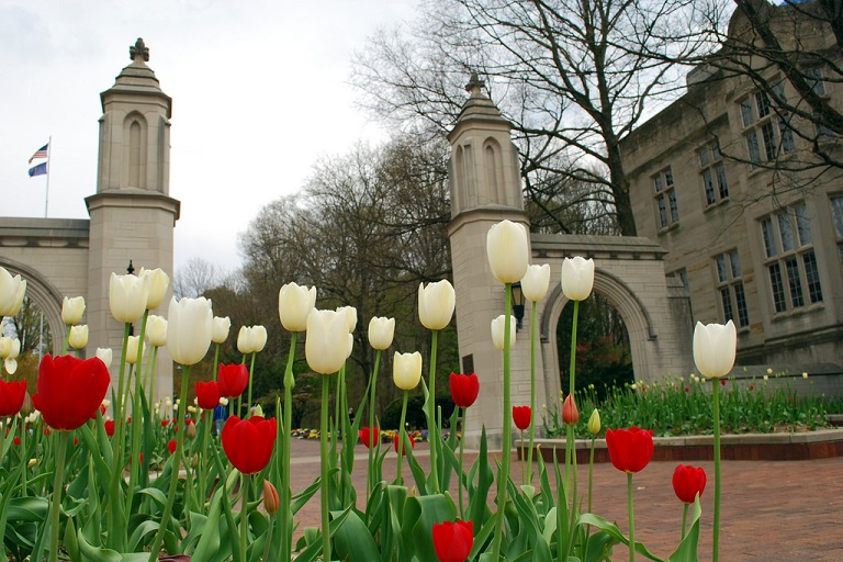 IU's Sample Gates with tulips in foreground, by Owen Parrish on flickr