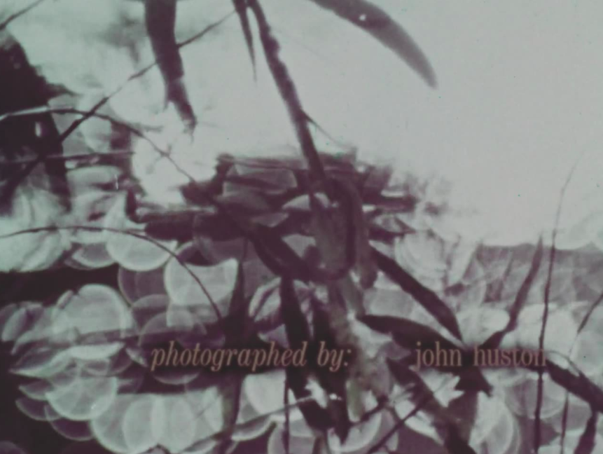 still from John Huston film showing stream and plants