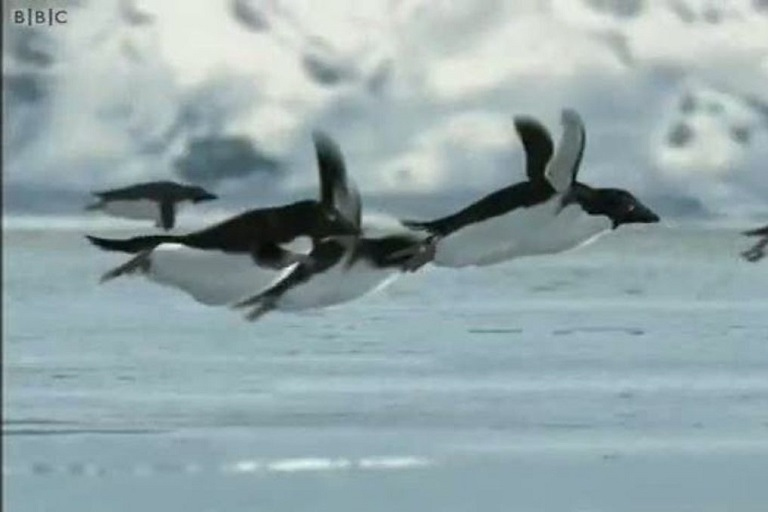 Penguins flying over water