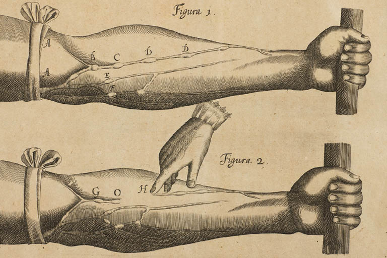 Woodcut print of two forearms, showing experiments on the circulation of the blood.
