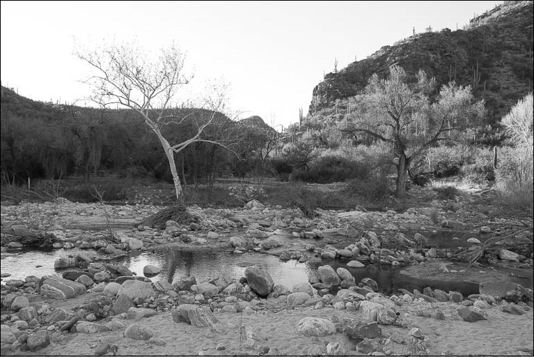 A stream runs through Sabino canyon