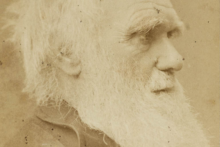 Close up profile of bearded, gray-haired white man