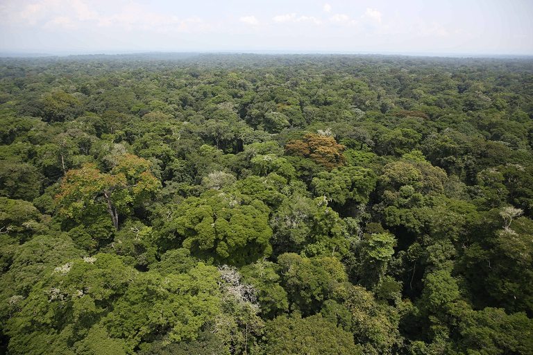 An aerial view of the Ituri forest in the Democratic Republic of Congo