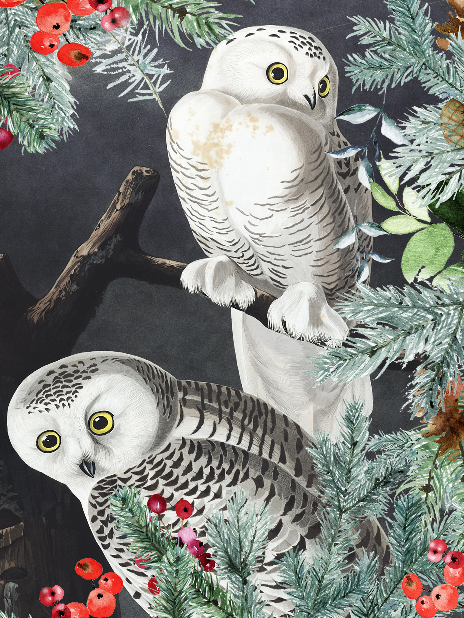 A artist drawing of two snowy owls sitting on tree branches. A festive frame of greenery has been added