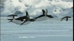 Still image from the BBC flying penguins spoof video